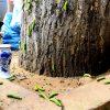 Cả nghìn con sâu xanh bủa vây khu phố